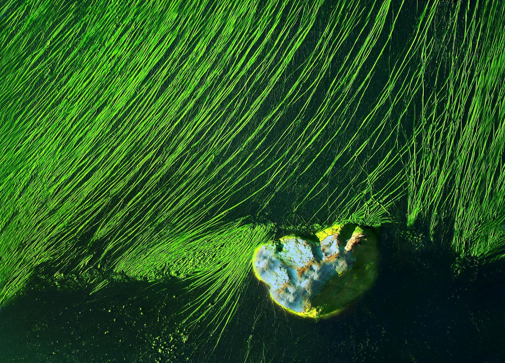 erstes leben algen im wasser 2 enstehung der welt