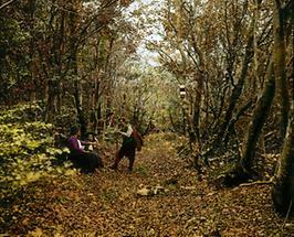 Eichenwald am Abstieg von der Ötscherhöhle