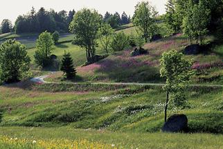 Dietrichsbach bei Altmelon (2)
