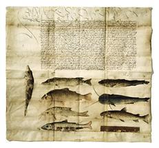 Fischereiordnung Kaiser Maximilians I.