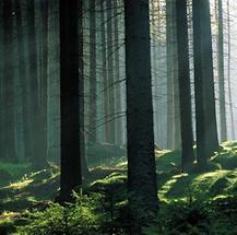 Mühlviertler Wälder