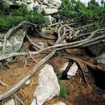 Unterholz am Fuße des Plöckensteins
