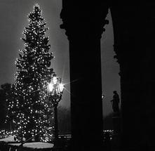 Christbaum vor dem Wiener Rathaus