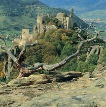 Burgruine Dürnstein in der Wachau, Niederösterreich