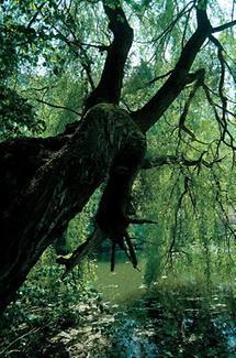 Bäume im Schlosspark von Eckartsau