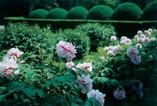 Schlossgarten von Eckartsau