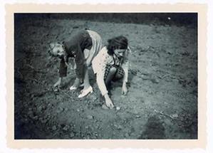 Zwei Mädchen beim Erdäpfelklauben