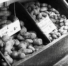 Kartoffeln im Feinkostladen