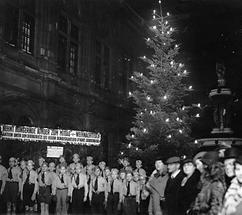 Weihnachtsbäume in den Strassen von Wien