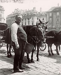 Ein Fiaker versorgt seine Pferde