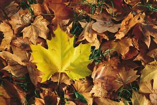 Herbstlaub in einem niederösterreichischen Park