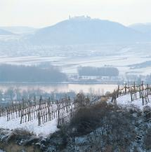 Weinberge im Winter