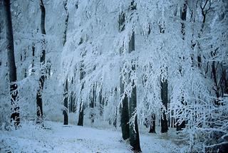 Winterlandschaft am Gallitzinberg in Wien