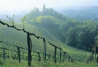 Weinrieden in der Südsteiermark