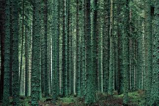 Weinsberger Wald bei Gutenbrunn