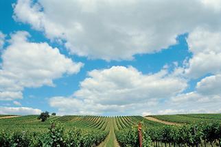 Weingerge in Niederösterreich