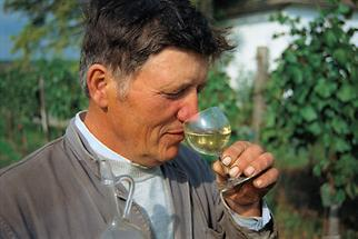 Weinhauer in seinem Weingarten