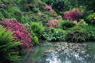 Teich  im Garten von André Heller
