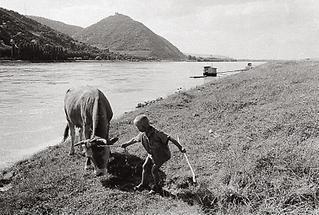 Das Überschwemmungsgebiet der Wiener Donau