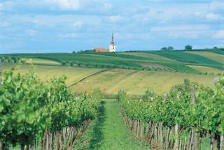 Weinviertler Hügelland (1)