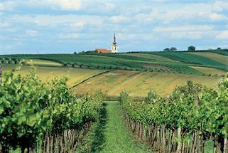 Weinviertler Hügelland (2)