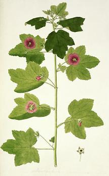 Botanische Illustration (2)