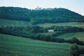 Weinberge am Kahlenberg