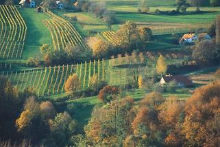 An der Südoststeirischen Weinstrasse