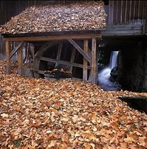 Alte Mühle und Säge in Schöllbüchl an der Lainsitz