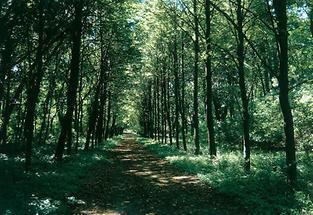 Allee im Park von Schloss Frohsdorf