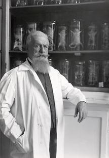 Der Sexualforscher Eugen Steinach
