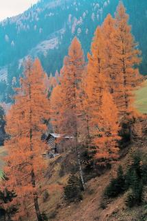 Herbstlandschaft im Paznauntal, Tirol