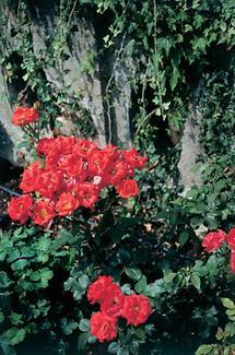 Blumen im Schlosspark Pottenbrunn
