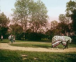 In Decken gehüllte Rennpferde