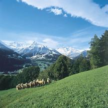 Alpenlandschaft im Rätikon, Vorarlberg