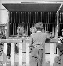 Zirkus Rebernigg (4)