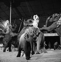 Zirkus Rebernigg (3)