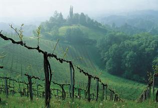Weinbau an der Steirischen Weinstrasse