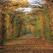Der Park von Schloß Schönbrunn