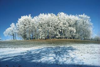 Stifterwald