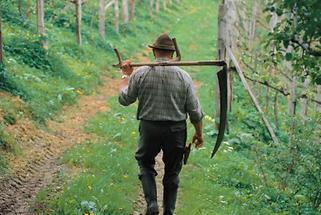 Weinbauer auf dem Weg zur Arbeit