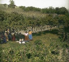 Weingarten in Sievering