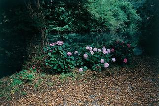 Rosen im Pottenbrunner Landschaftspark