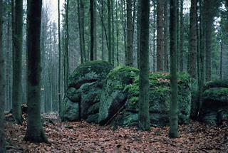 Weinsberger Wald bei Bärenkopf