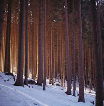 Im Weinsberger Forst