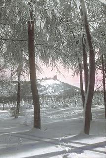 Winter im Wienerwald
