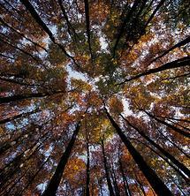 Herbstwald in Buchberg bei St Ilgen 3