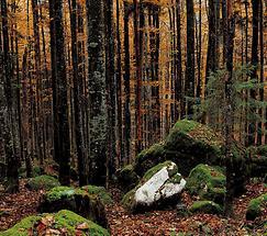 Herbstwald in Buchberg bei St Ilgen 4