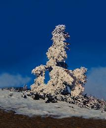 Verkleideter Baum