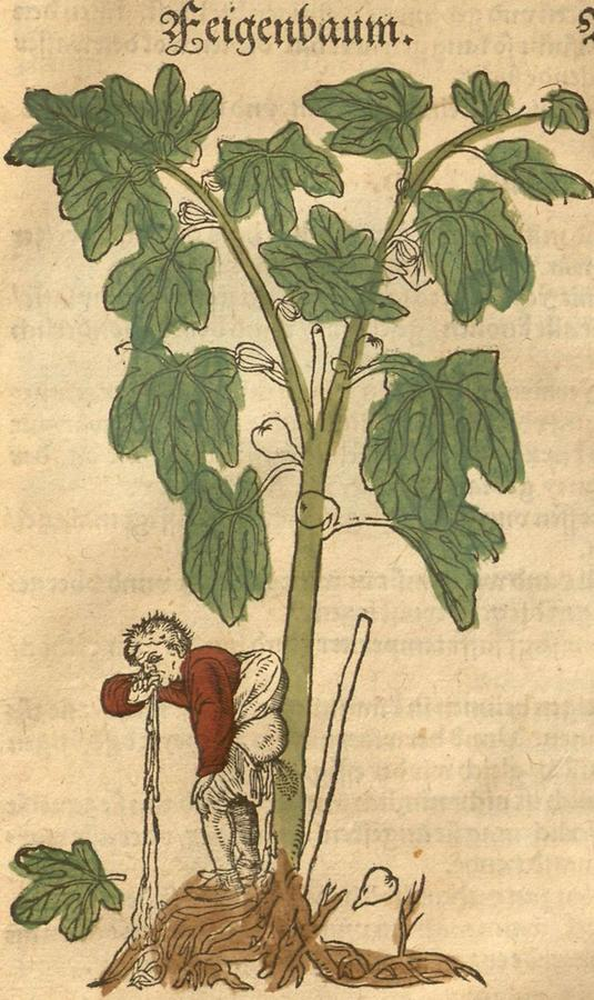 Illustration Feigenbaum